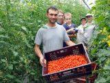 Crédito ajuda agricultores de Morretes a retomar produção